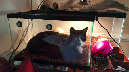 Вот новую кровать нашел себе кошки, смешные  кошки, смешные животные, собаки