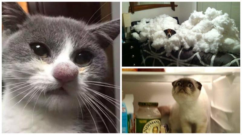 Маленькие пушистые сорванцы, без которых жизнь была бы ужасно скучной кошки, смешные  кошки, смешные животные, собаки