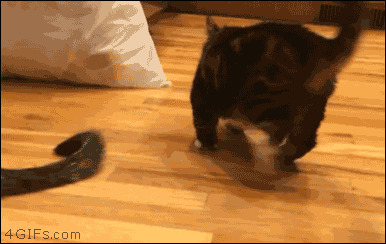 кошки, смешные  кошки, смешные животные, собаки