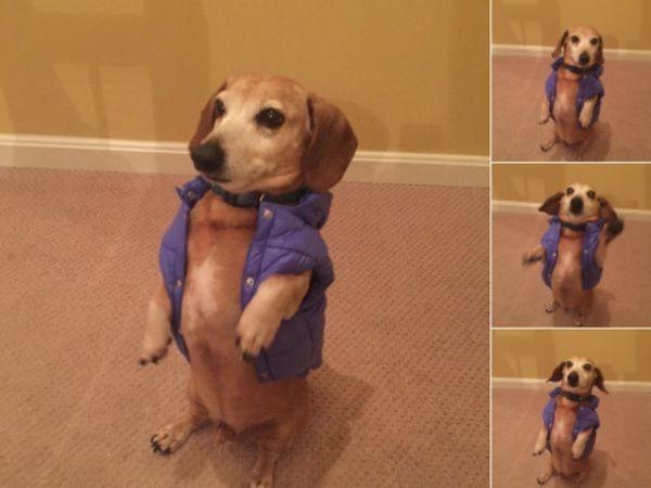 Что-то я немного растолстел, куртка уже не застегивается кошки, смешные  кошки, смешные животные, собаки