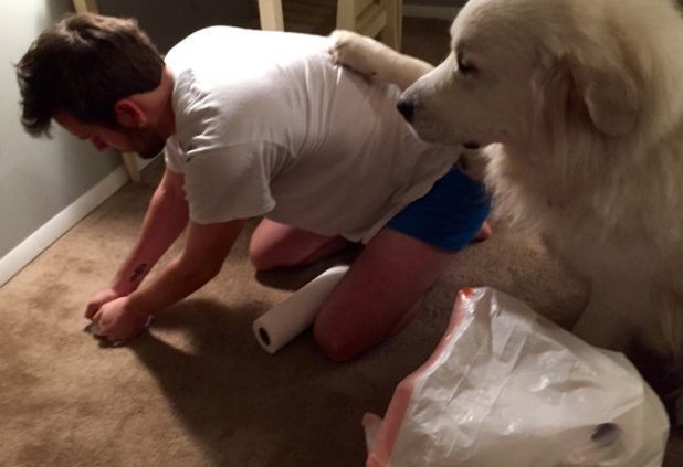 Всегда поддерживаю хозяина морально, пока он убирает мое дерьмо кошки, смешные  кошки, смешные животные, собаки