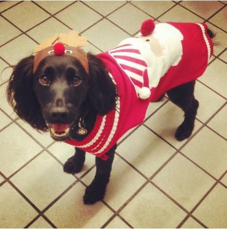 23. Как же ему идет этот свитер  праздник, рождество, собака