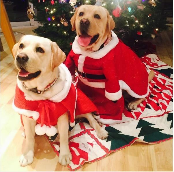 25. Мистер и миссис Клаус праздник, рождество, собака