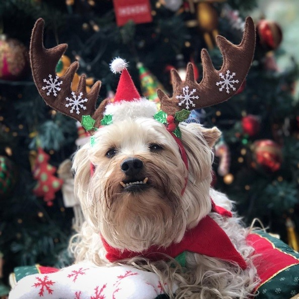 27. Счастливого Рождества!  праздник, рождество, собака