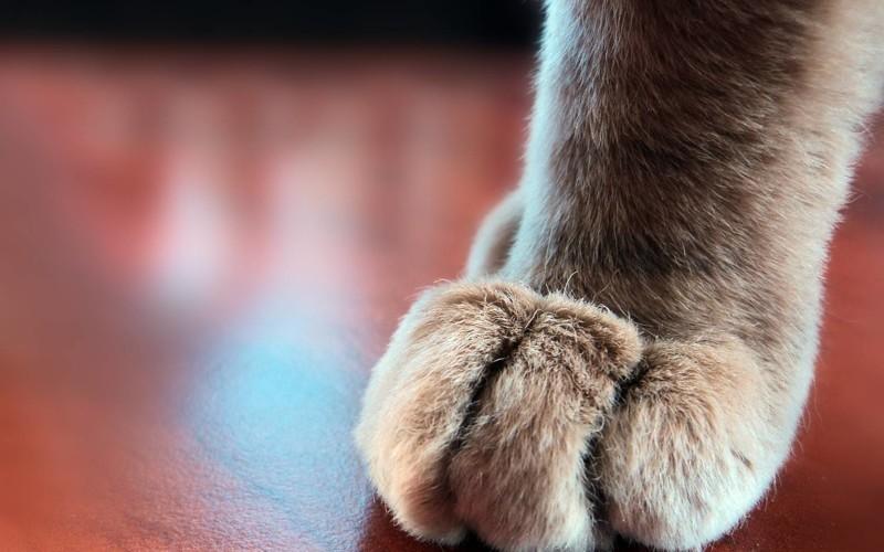 Пост обожания кошачьих лапок котики, лапки, милость