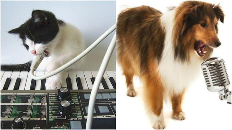 10 животных, которые поют лучше людей видео, животные, мимиметр зашкаливает, поющие животные