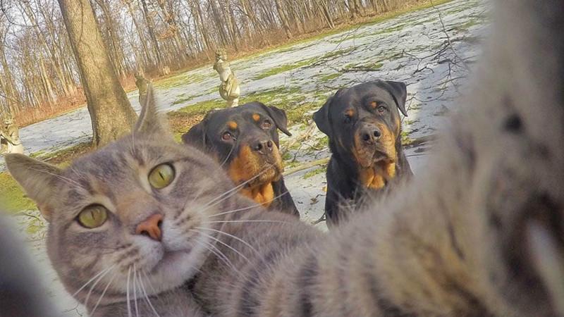 Если бы животные тоже делали селфи животные, милые и смешные, фото