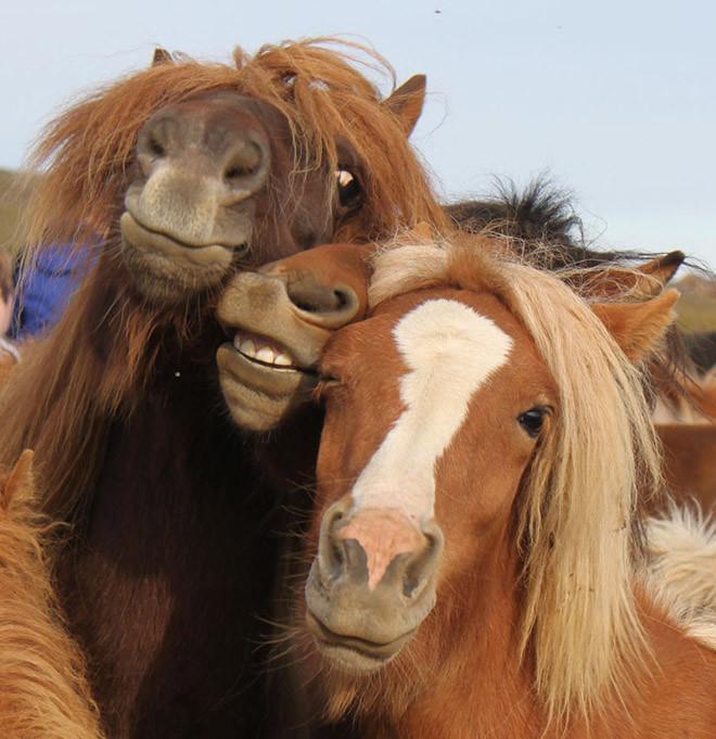 21 животные, милые и смешные, фото
