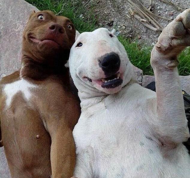 13  животные, милые и смешные, фото