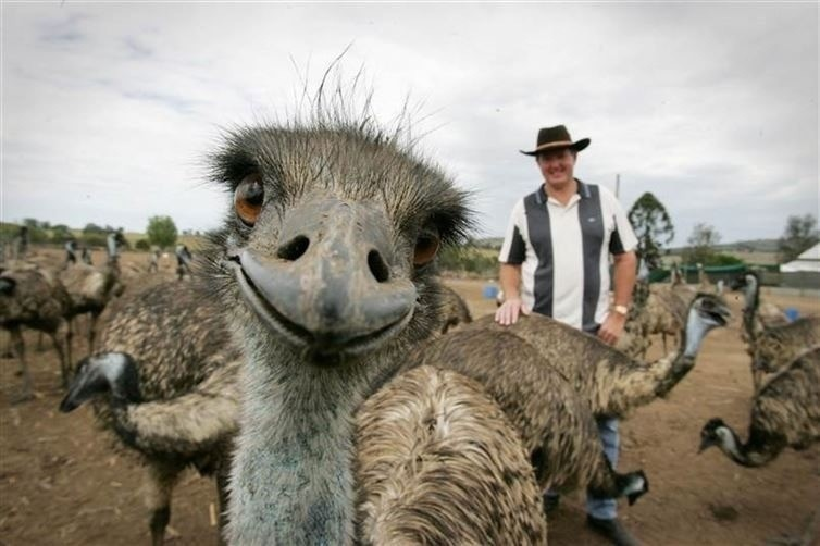 18 животные, милые и смешные, фото