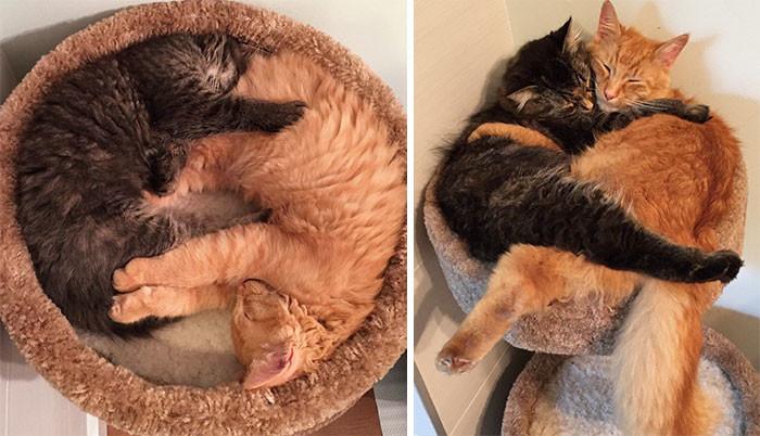 10. Неразлучные Лили и Ренли спят вместе, даже перерастая кровать друзья, животные, милота