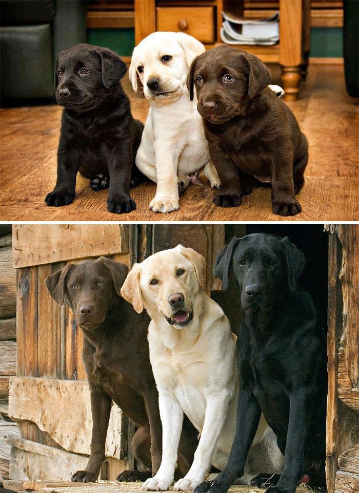 2. Три мушкетера друзья, животные, милота