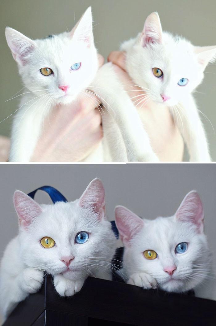 3. Симпатичные близняшки друзья, животные, милота