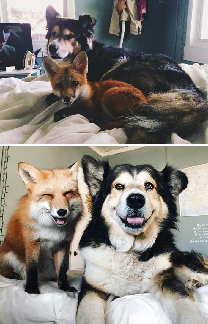 1. Лучшие друзья со дня встречи друзья, животные, милота