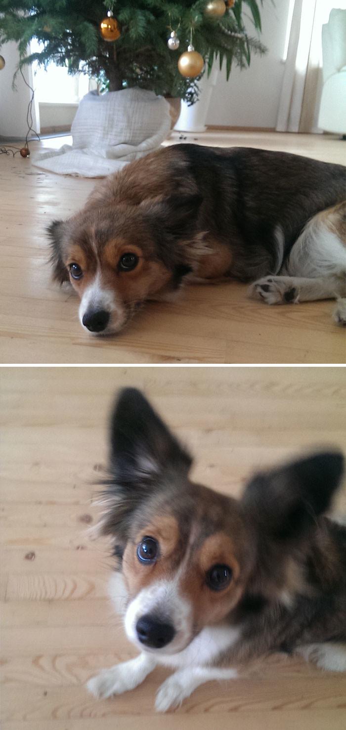 7. до и после, кошки, похвала, собаки