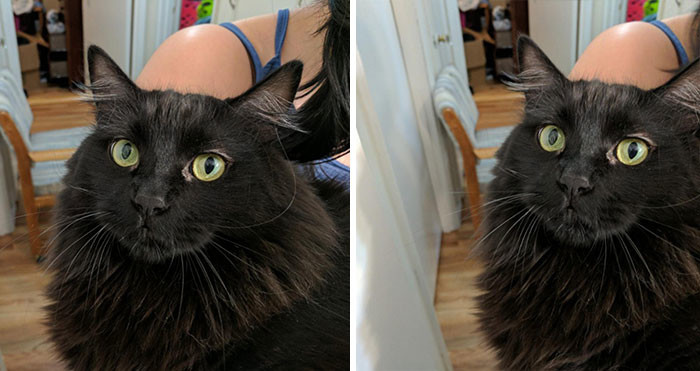 22. до и после, кошки, похвала, собаки