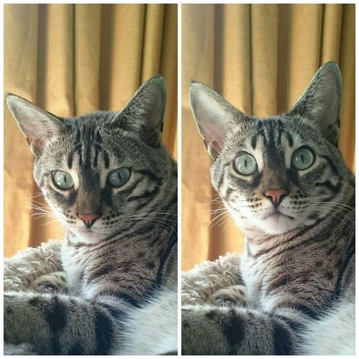26.  до и после, кошки, похвала, собаки