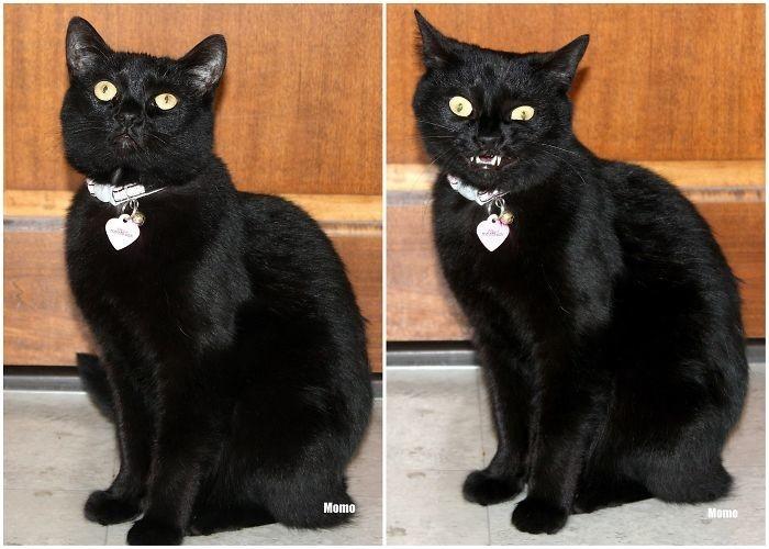 11. до и после, кошки, похвала, собаки