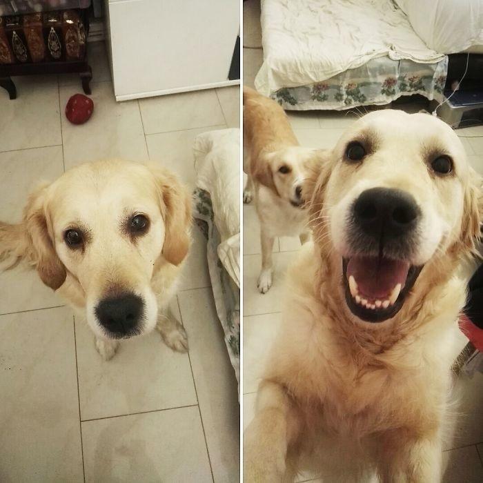 14. до и после, кошки, похвала, собаки