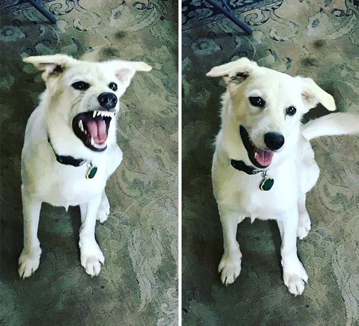 6. до и после, кошки, похвала, собаки