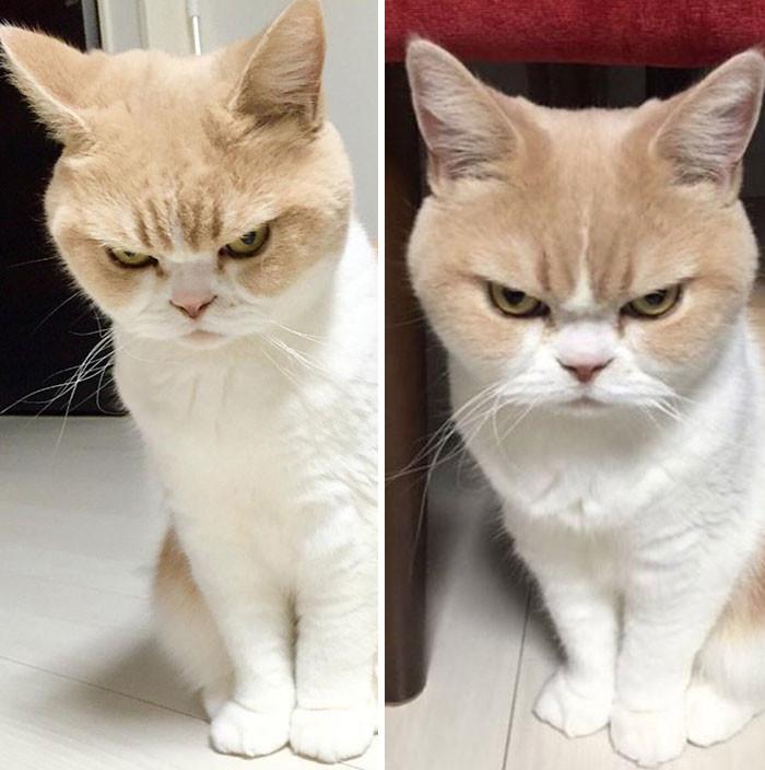 2. до и после, кошки, похвала, собаки