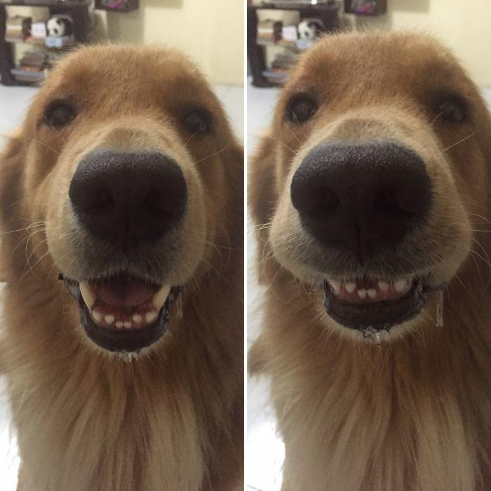 20. до и после, кошки, похвала, собаки