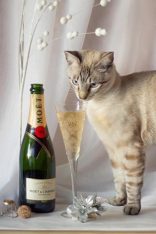 Праздничные котики ждут Новый год коты, новый год, фото