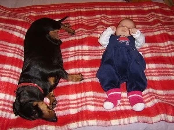 Дети и собаки...  дети, собаки
