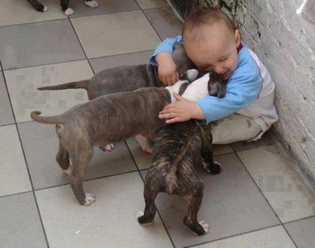 25 доказательств того, что детям необходимы домашние животные! дети, животные, собаки, фото, фотоподборка