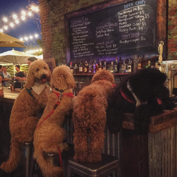 25. Но вечером вдруг звонят друзья и предлагают по пиву похмелье, смешные животные, собаки, фото собак
