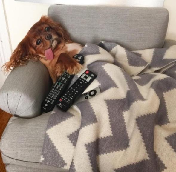 23. Когда хочется только лежать и смотреть сериалы. И чтобы никто не отсвечивал похмелье, смешные животные, собаки, фото собак