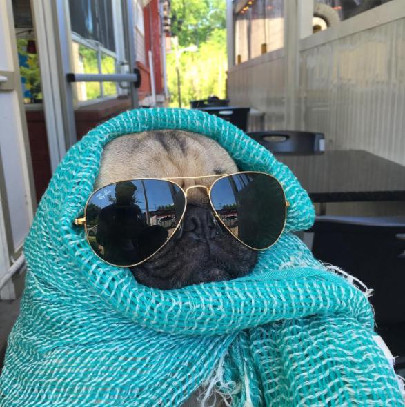 15. Когда все-таки выполз на улицу, но прячешь лицо похмелье, смешные животные, собаки, фото собак
