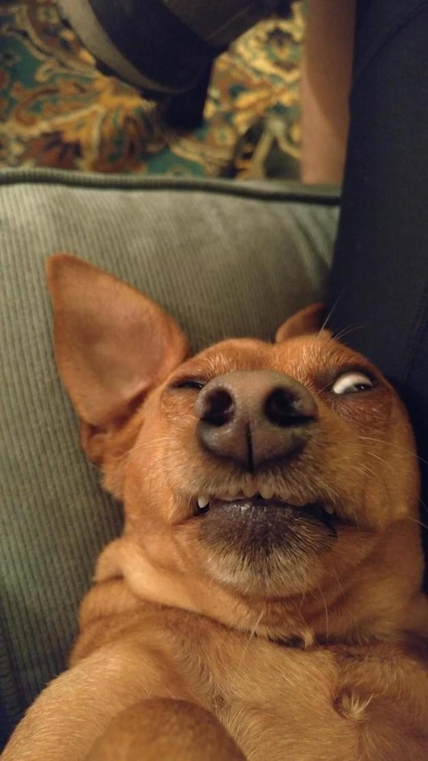 18. Когда отправляешь селфи своему вчерашнему собутыльнику похмелье, смешные животные, собаки, фото собак