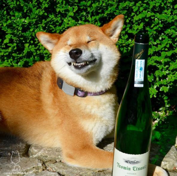 12. Когда один вид алкоголя вызывает рвотные позывы похмелье, смешные животные, собаки, фото собак