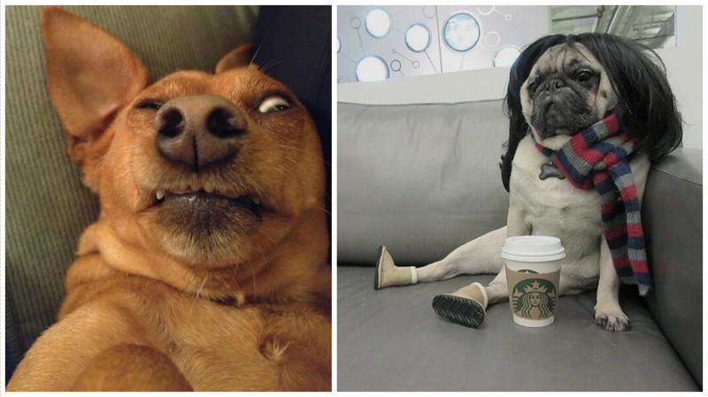 """25 смешных собак в фотоподборке """"Я и похмелье"""" похмелье, смешные животные, собаки, фото собак"""