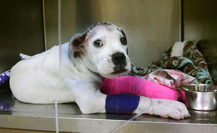 Недавно спасенная собака ухаживает за своим новым другом, который прошел через все круги ада бездомные животные, животные, собаки, сострадание, сочуствие