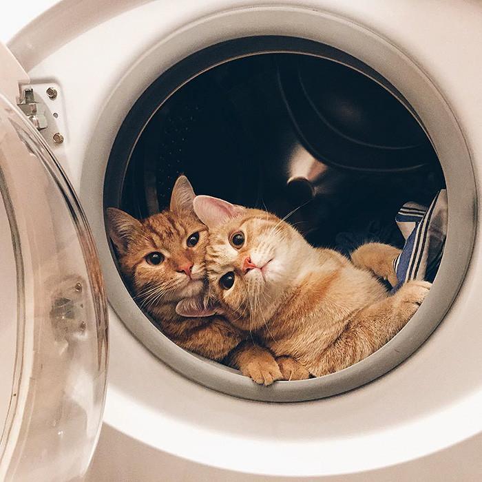 Двоих рыжих котят,найденных в саду, не разлучали ни на один день животные, коты, мило, подобрыш, фото