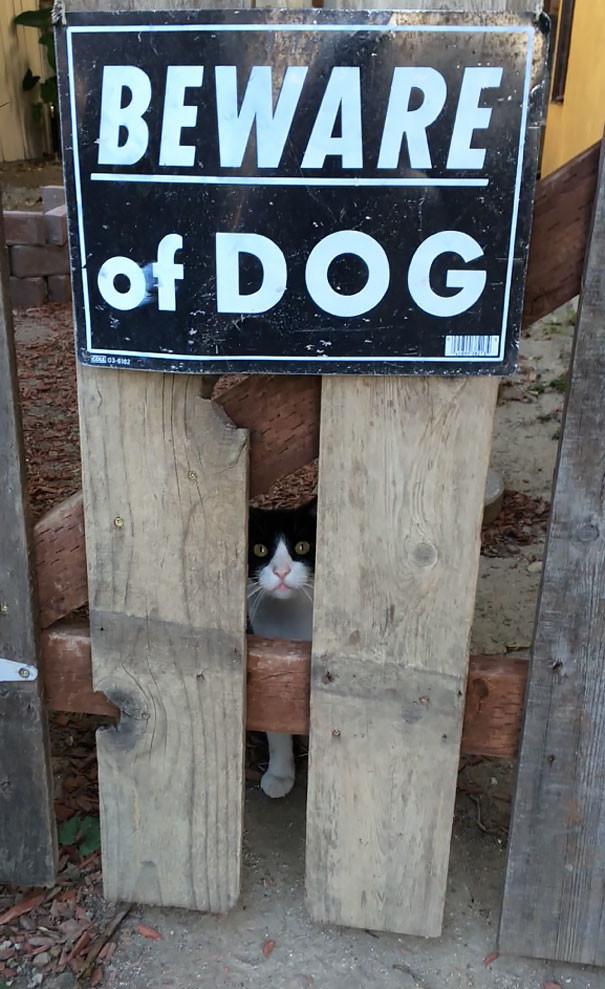 Осторожно! Злая собака! животные, собака