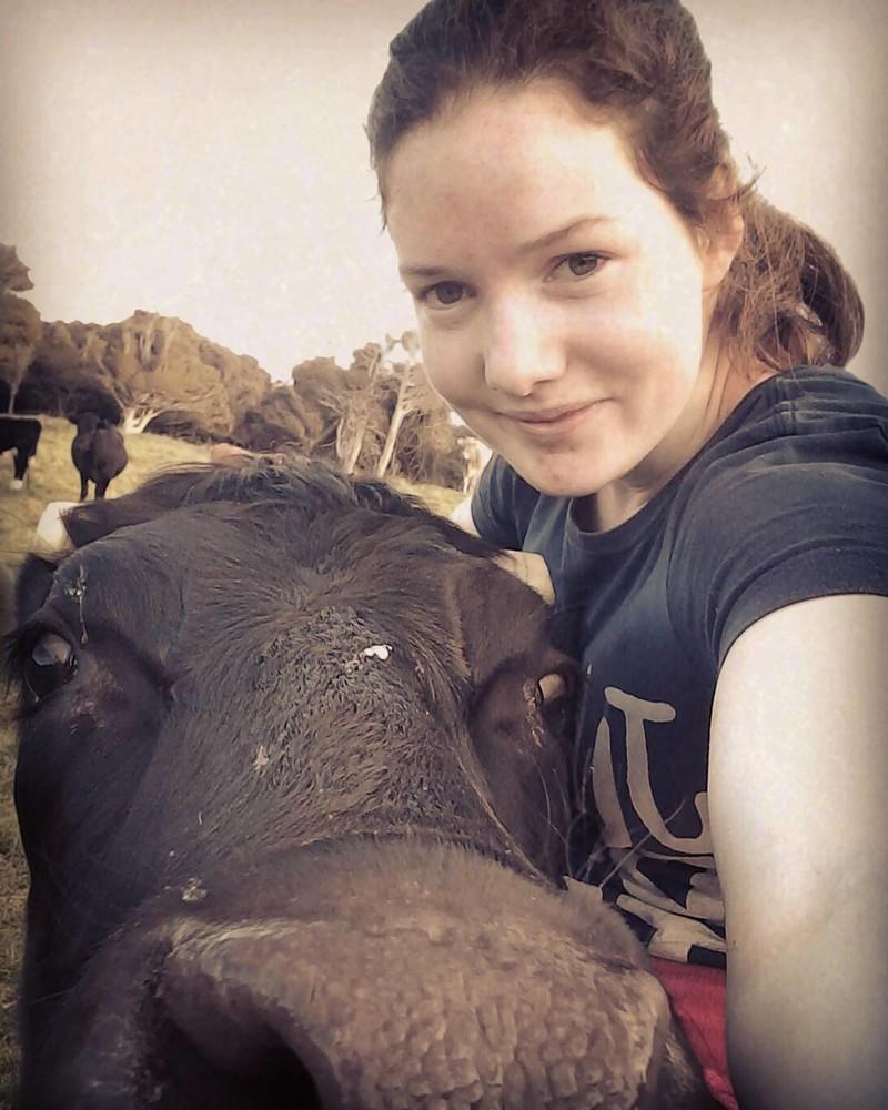 Эта корова из Новой Зеландии думает, что она — лошадь. А почему бы и нет! животные, корова