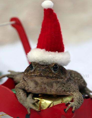К Новому году готовы: 100 животных, которые уже нарядились к праздникам животные, новый год, праздники