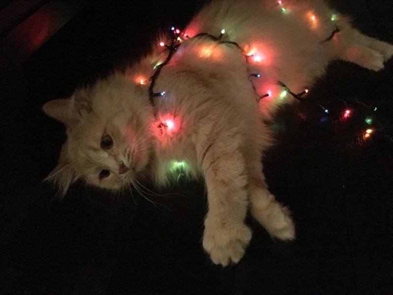 Экзистенциальная тоска: Инстаграм грустного кота instagram, животные, кот