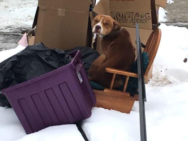 Семья переезжала и бросила собаку —но собака продолжала их ждать, замерзая на морозе приютили собаку, собак бросают нелюди, щенки ищут дом