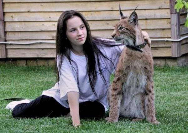 Настоящая домашняя рысь дом, животные, история, кошка, рысь