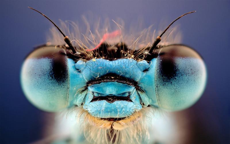Хамелеоны, стрекозы и некоторые виды лягушек способны видеть на 360 градусов животные, интересно, особенности, факты
