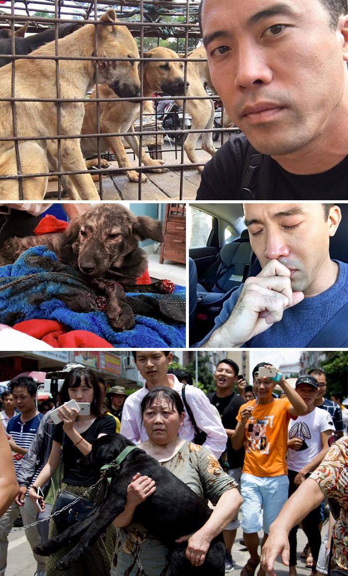 Этот мужчина спас 1000 собак,предназначенных для фестиваля собачьего мяса в Юлине, хотя и был за это избит  животные, спасение, счастливый конец