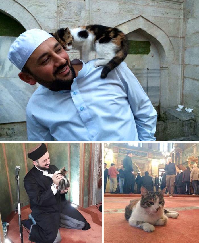 Имам открыл двери мечети для бездомных кошек, чтобы те не мерзли животные, спасение, счастливый конец