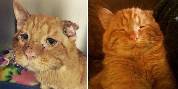 """""""Самого грустного кота в мире"""", никто не хотел брать. Но когда его все же взяли в дом, меньше чем через час он совершенно преобразился! животные, спасение, счастливый конец"""