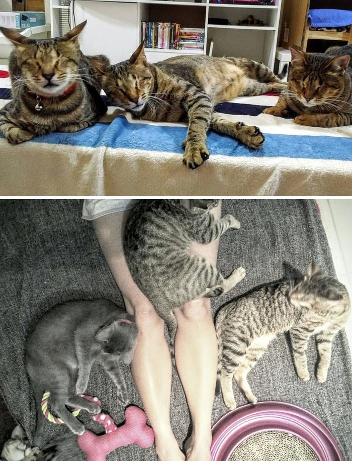 Трислепые кошки никому не были нужны. Но нашлась хозяйка, забравшая всех троих животные, спасение, счастливый конец