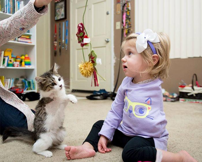 Трехлапый котенок стал лучшим другом малышки, у которой ампутировали руку животные, спасение, счастливый конец