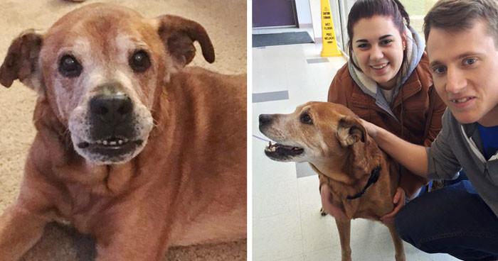 Пара, пришедшая в приют, чтобы сделать пожертвование, вернулась домой с 17-летней собакой животные, спасение, счастливый конец